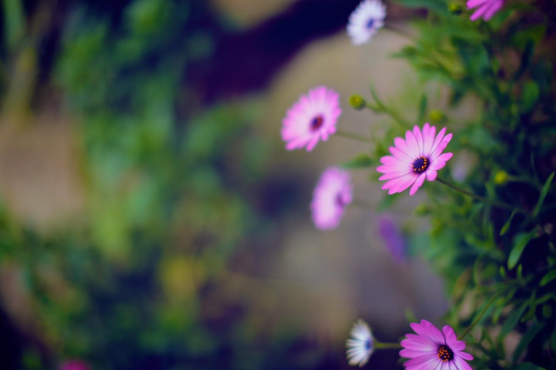 Wendy's Secret Garden 4